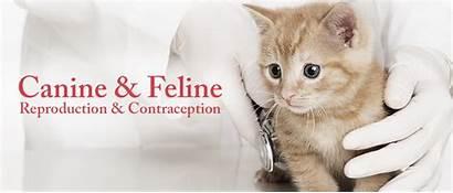 Canine Reproduction Resources Feline Animals Animal