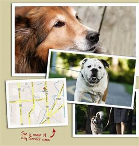 Dog Walking Service | Dog Walking Company Plainfield, IL