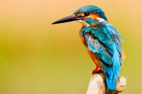 Best Pics Free 999 Colorful Bird Pictures 183 Pexels 183 Free Stock Photos