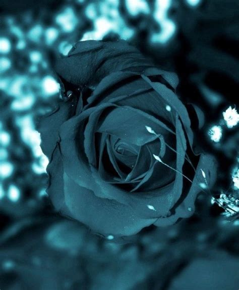 pin by janes colors on teal nights shades of
