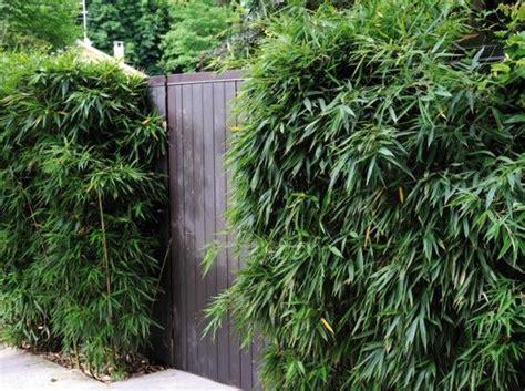 les 25 meilleures id 233 es de la cat 233 gorie haie bambou sur jardiniere pour bambou