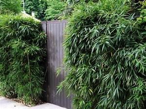 Bambous En Pot : 93 best arbres et bambous images on pinterest ~ Melissatoandfro.com Idées de Décoration