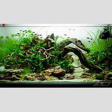 Stu's 90x45x45 Dragon Stone Scape  Aquascaping World Forum