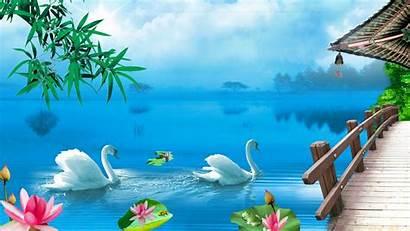 Swan Lake Desktop Wallpapers Nature Backgrounds Wallpapers13