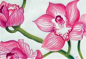 Orchids Drawing by Ramneek Narang