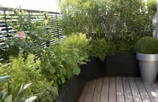 plantes grimpantes en pot des plantes grimpantes pour balcon et terrasse on est toujours dans le jardin archzine fr