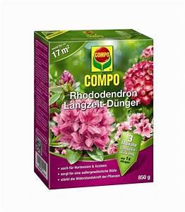 Compo Koniferen Langzeit Dünger : rhododendron langzeit d nger compo ~ Frokenaadalensverden.com Haus und Dekorationen