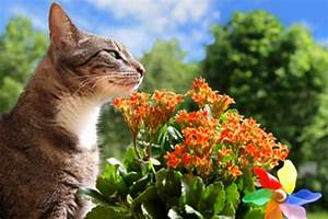 Welche Pflanzen Sind Für Hunde Giftig : welche substanzen sind f r katzen giftig tierischehelden ~ Watch28wear.com Haus und Dekorationen