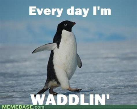 Penguin Meme - 16 penguin memes that are too adorbs for words sayingimages com