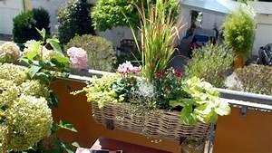 Balkonbepflanzung Im Herbst : roter farbtupfer ein pflanztipp f r den balkon im herbst ~ Markanthonyermac.com Haus und Dekorationen