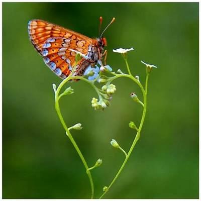 butterfly cute flower green love - image #205281 on
