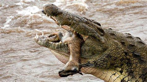 coccodrillo del nilo kenya vacanze