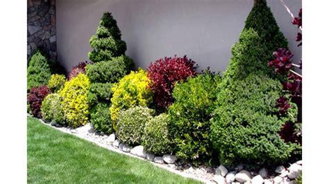 Garden Decorative Bushes small bushes for landscaping landscape channel