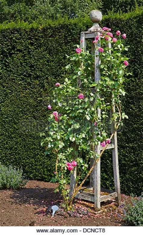 Best 25+ Rose Trellis Ideas On Pinterest  Trellis Ideas
