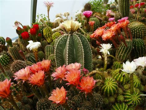 Midwest Cactus & Succulent Show and Plant Sale Is Part of ...