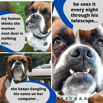 Dog Meme Boxer Stalking Sarcastic Petrage Memes