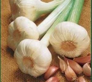 Cultiver De L Ail : ail comment le cultiver hortik le blog sur le jardin et ~ Melissatoandfro.com Idées de Décoration