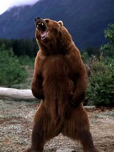 What Are The 7 Signs Of A Bear Market