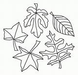 Coloring Leaf Oak Printable Stencil Leaves Pages Fall Popular sketch template