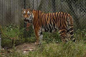 Seneca Park Zoo  Rochester