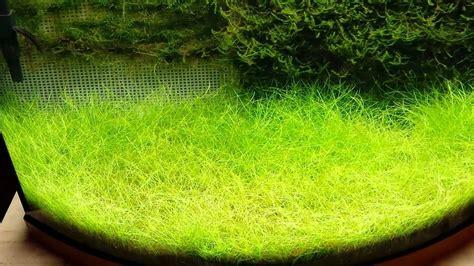 Java Moss Aquascape by Java Moss Update