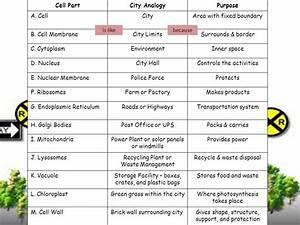 Cell City Worksheet - Geersc