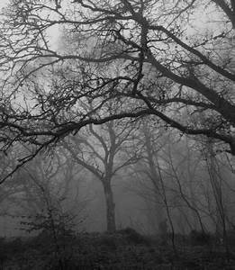 Epping Forest Ghosts, Essex | History, Haunted places and ...