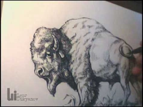 drawing  american buffalo bison  igor lukyanov