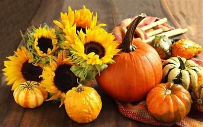 Desktop Pumpkin Autumn Background Sunflower Pc 1080