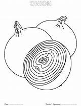 Onion Coloring Pages Sheet Onions Template Getdrawings sketch template