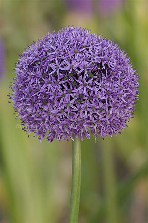 specialist flower bulb mail order company based in