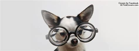 chihuahua  glasses facebook cover profile cover