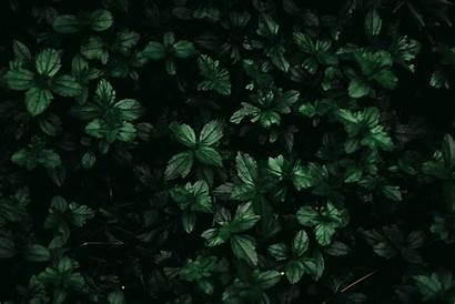 Nature Dark Leaves Grass Uploaded Plants Wallpapers