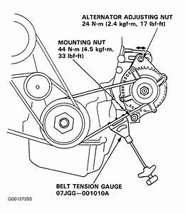 1999 Acura Integra Serpentine Belt Routing And Timing Belt