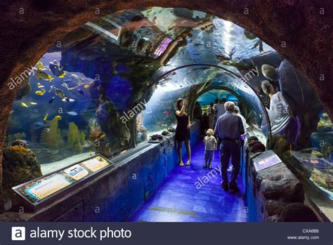 sea aquarium in the mall of america bloomington minneapolis stock photo royalty free