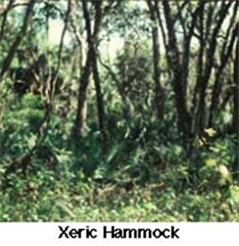 Xeric Hammock by Enchanted Forest Nature Sanctuary Woodlands Habitats