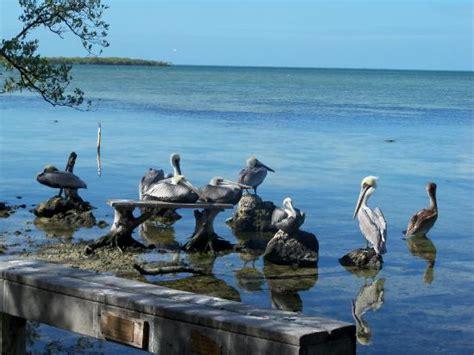 Key Largo 2019 Best Of Key Largo Tourism  Tripadvisor