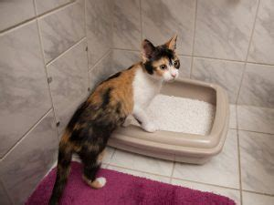 meine katze geht oft auf die toilette