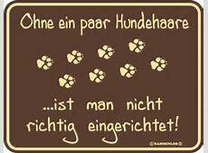 coole witzige lustige Sprüche Blechschild Schild Hunde