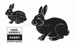 Cut Of Rabbit  Poster Butcher Diagram For Groceries  Meat