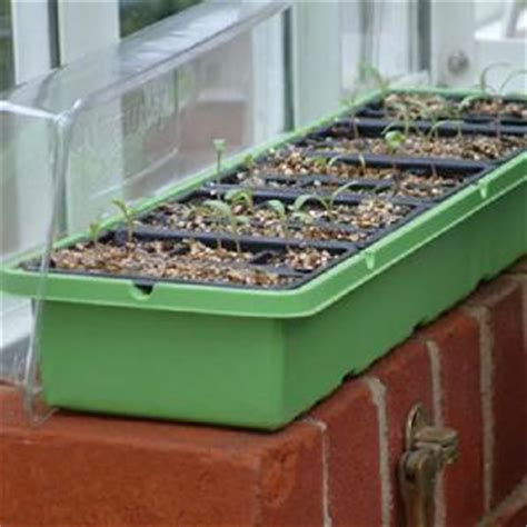 Windowsill Greenhouse From Propagation  Allotment Shop