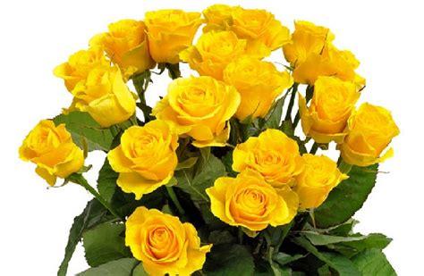 bedeutung gelbe bedeutung farben und anzahl euroflorist