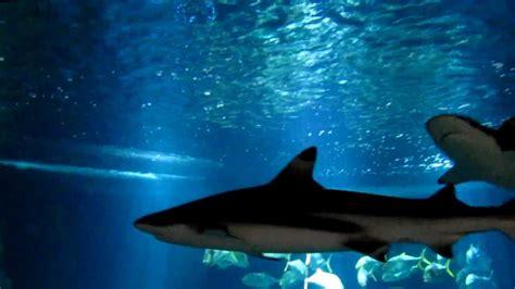 aquarium du trocad 233 ro