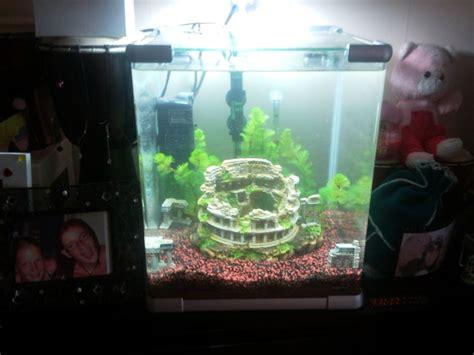 d 233 butants aquarium 40l que faire aqua d 233 butant