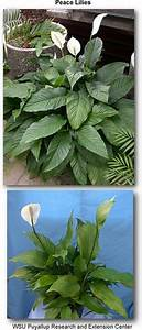 1000+ images about Flowers on Pinterest | Peace Lily ...