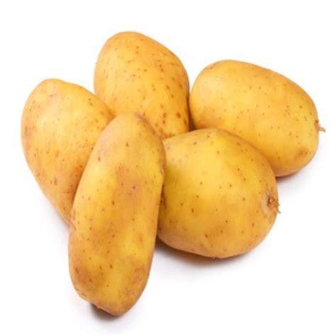 cuisiner des pommes de terre la pomme de terre préparer cuire associer cuisiner