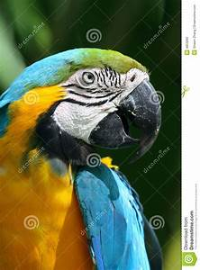 Parrot - Blue And Yellow Macaw Stock Photo - Image: 4853260