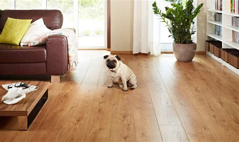 The Best Flooring For Dogs  Looking For The Perfect Option