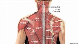 Yoga Anatomy  Yoga For Neck Pain And Neck Tension