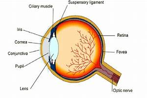 Diagram  Labeled Eye Diagram Disease